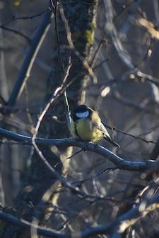 L'uccello si siede sul ramo di un albero