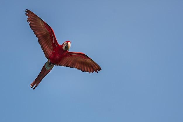 Uccello del sud america nell'habitat naturale