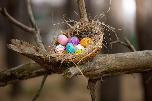Nido dell'uccello con le uova di pasqua sull'alto ramo alla foresta