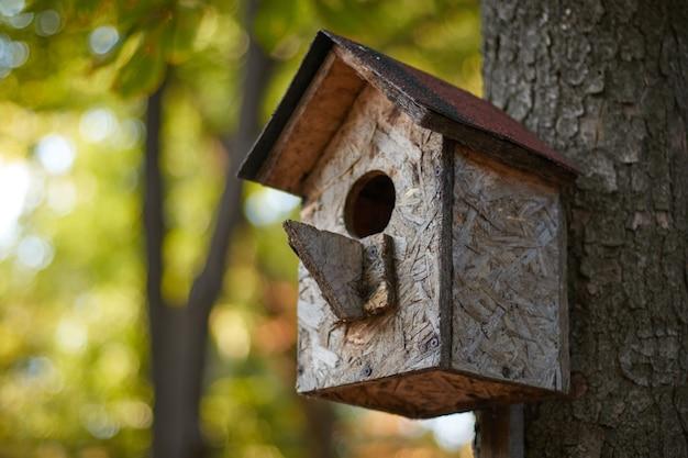 Birdhouse su un ramo su un tronco d'albero casa degli uccelli in autunno nel parco nella foresta sfondo sfocato