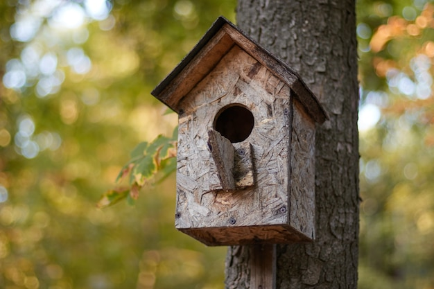 Birdhouse su un ramo su un tronco d'albero casa degli uccelli in autunno nel parco nella foresta offuscata
