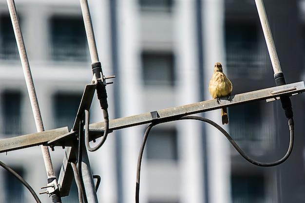 Gli uccelli sono sull'antenna.
