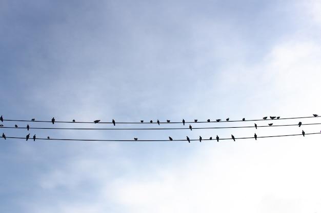 Uccelli sul filo elettrico