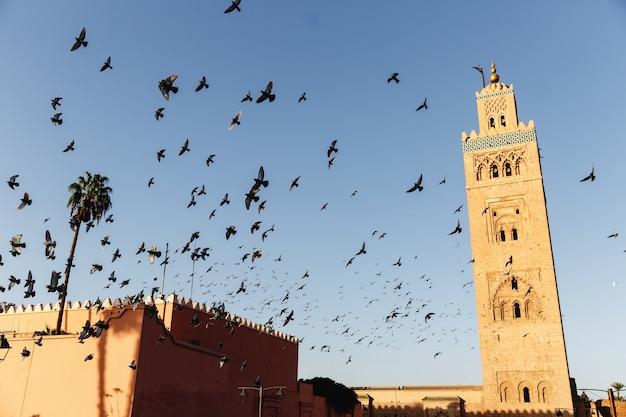 Gli uccelli volano intorno al quadrato del mercato in una città africana marrakesh Foto Premium
