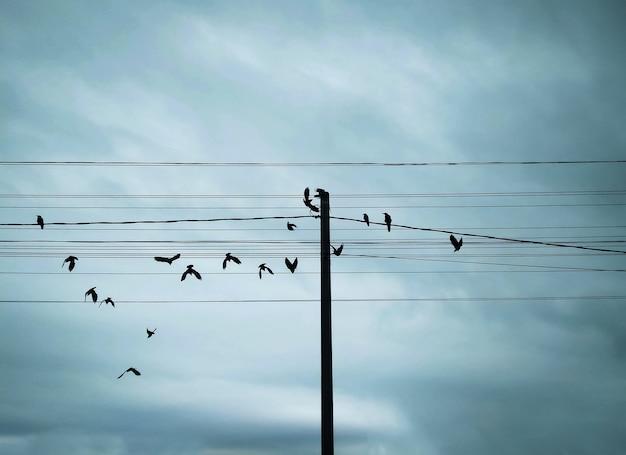 Uccelli che volano e che si siedono sui fili del palo elettrico al cielo scuro e al fondo delle nuvole pesanti