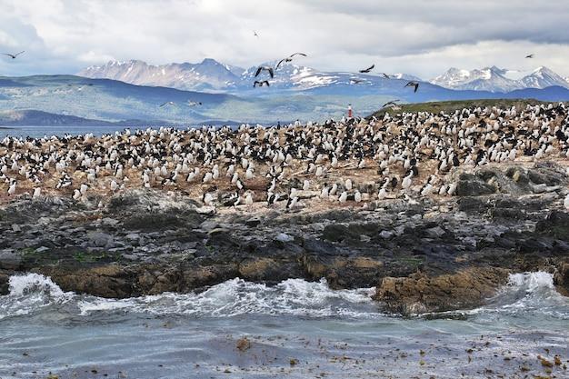 Uccelli e pinguini sull'isola nel canale di beagle nella terra del fuoco in argentina