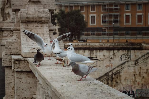 Gli uccelli si siedono su un ponte sul tevere a roma