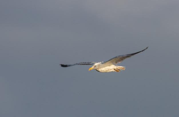 Uccelli in inverno sulla costa della cantabria!