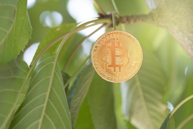 Bit coin concetto di criptovaluta concetto di valuta treeborn