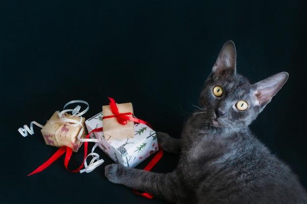 Su uno sfondo nero siede un gatto grigio e regali di natale sono confezionati in carta regalo e legati con nastri e corde. preparando per il nuovo anno