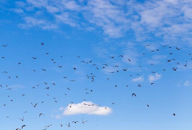 Uccelli neri che volano in un paesaggio con cielo nuvoloso