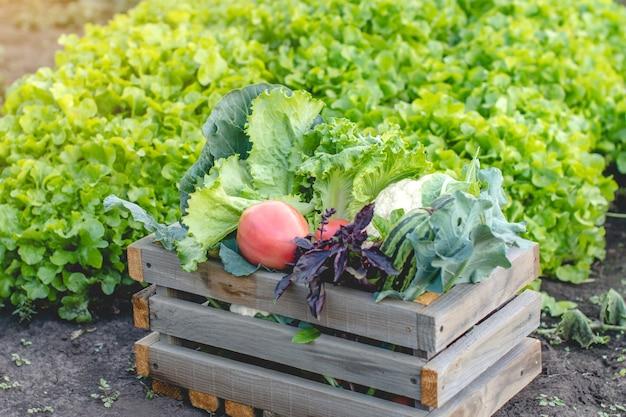 Scatola nera con verdure fresche e insalata verde