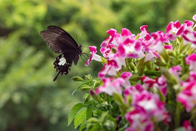Farfalla nera in una pianta fiorita