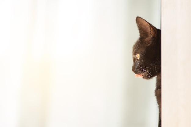 Gatto nero che lecca la lingua e guarda allo spazio testoconcetto pubblicitario prodotti per animaliveterinario