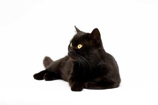 Gatto nero sdraiato cercando isolato su sfondo bianco