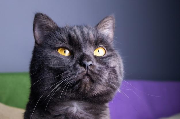 Primo piano del ritratto del gatto nero
