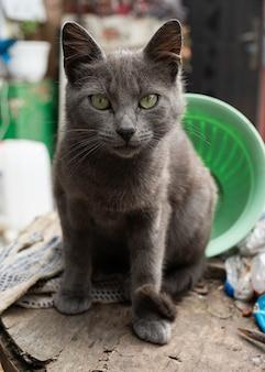 Ritratto di gatto nero con occhi verdi e sguardo attento nell'erba verde in natura simpatico gatto nero