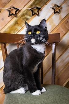 Ritratto di gatto nero