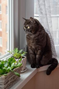 Il gatto nero si siede sul davanzale della finestra vicino a piante d'appartamento in vaso