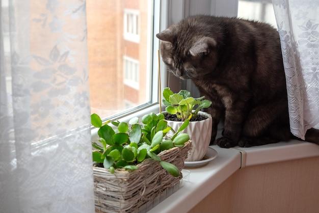 Il gatto nero si siede sul davanzale della finestra e gioca con piante d'appartamento in vaso verdi