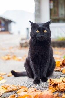 Gatto nero seduto fuori casa.