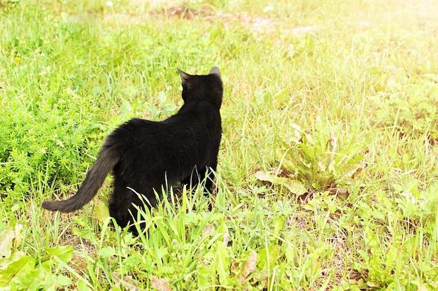 Il gatto nero cammina fuori nell'erba in una soleggiata giornata estiva