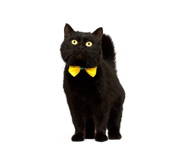 Gatto nero che indossa fiocco dorato isolato
