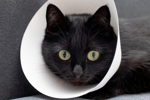 Gatto nero con collare elisabettiano sdraiato dopo l'operazione chirurgica. cura della salute degli animali.