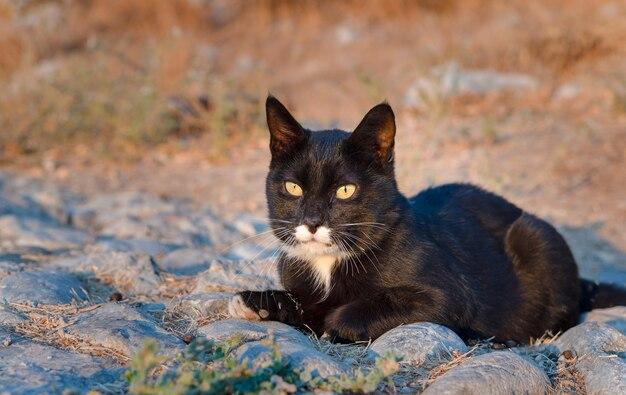 Un gatto nero con gli occhi verdi riposa sulle rocce in una calda giornata estiva.