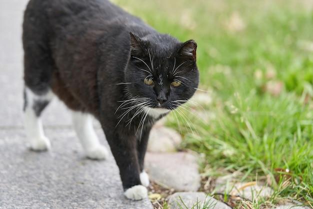Un gatto nero con macchie bianche cammina sull'erba verde