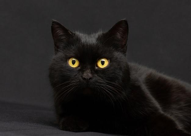 Gatto nero con gli occhi gialli su sfondo nero
