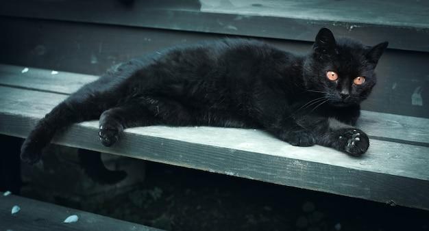 Il gatto nero con gli occhi gialli si trova sui gradini di legno