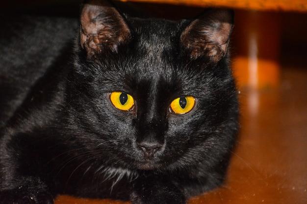 Il gatto nero con gli occhi gialli sdraiato sul pavimento di legno.