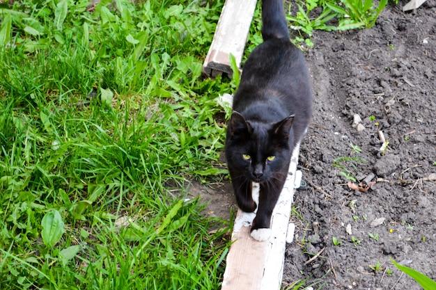 Il gatto nero con gli occhi gialli che cammina sul legno.