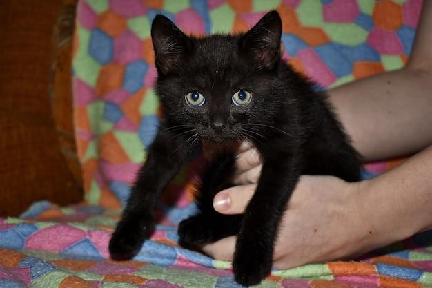 Gattino nero soffice a casa