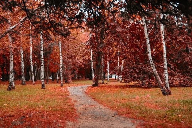 Black forrest. orange evening sun brilla attraverso il bosco nebbioso dorato bosco. magico autumn forrest. foglie di autunno colorate.