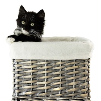 Gattino nero in un cesto di vimini grigio, isolato