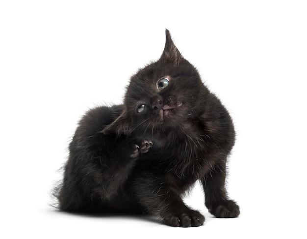 Gattino nero che graffia davanti a un muro bianco