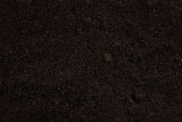 Terra nera per lo sfondo della pianta. vista dall'alto.