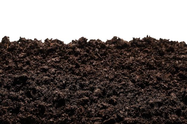 Terra nera per pianta isolata su priorità bassa bianca.