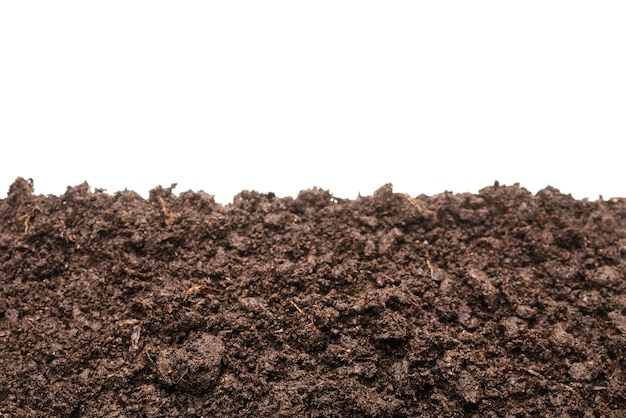 Terra nera per pianta isolata