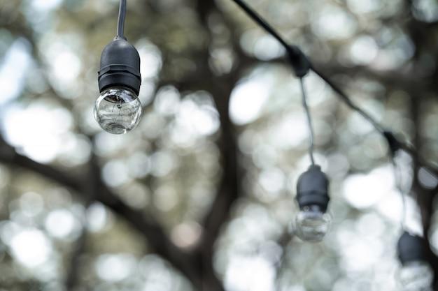 Luce nera diurna appesa tra gli alberi.