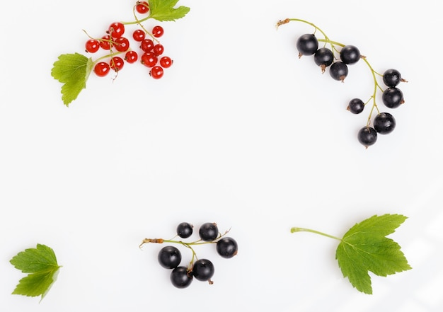 Ribes nero e rosso con foglie isolate. su bianco. rametto di frutti di bosco in primo piano
