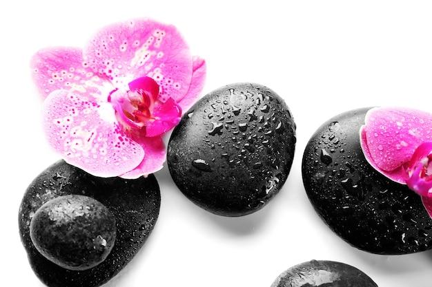 Pietre ed orchidee nere della stazione termale isolate su bianco