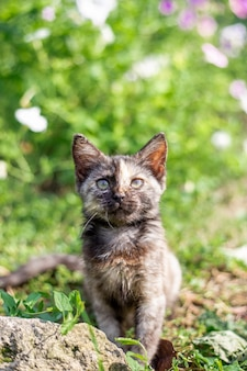 Gattino macchiato nero nell'erba verde. simpatici animali domestici.