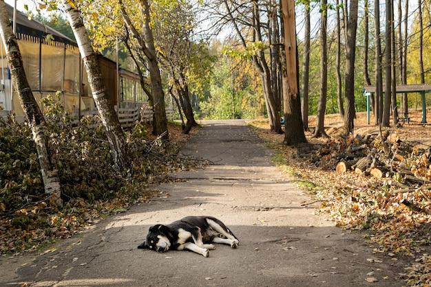 Nero cane senzatetto randagio dormire sulla strada asfaltata