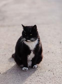 Il gatto di strada nero cammina lungo la strada. un gatto si siede sull'asfalto.