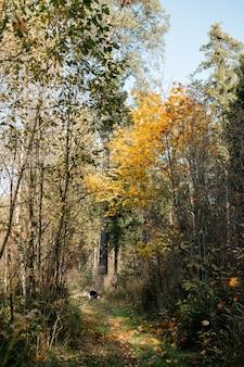 Cane di border collie bianco e nero nella foresta di autunno