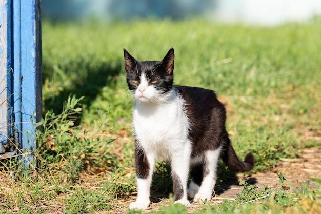 Gatto bianco e nero sull'erba verde