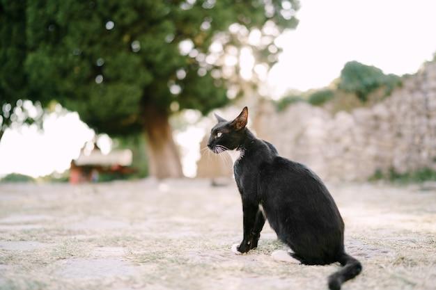 Un gatto bianco e nero è seduto sulla strada
